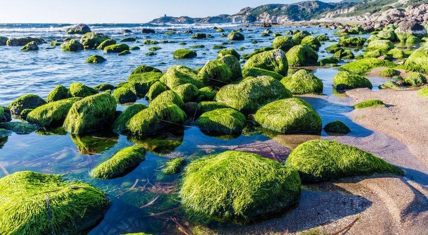 Photo of rocks covered in algae on a beach