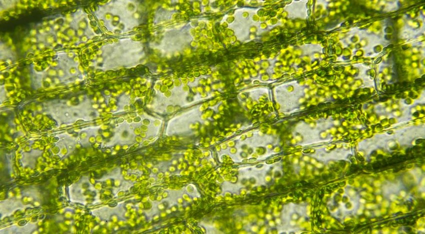 Close up photo on green plant cells