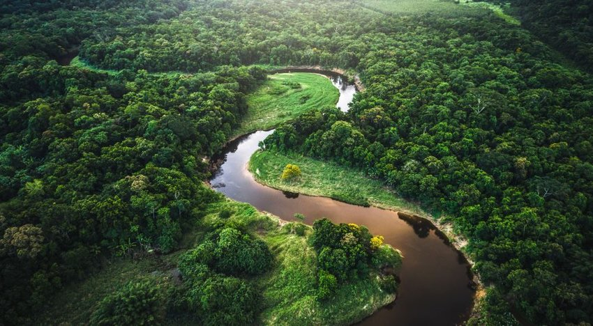 Aerial photo of a river surrounded by bright green treese