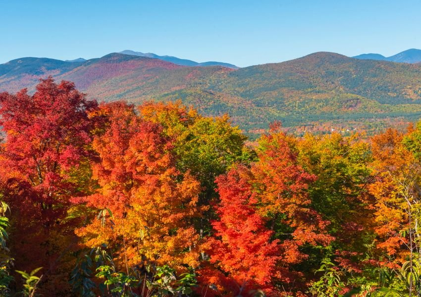 Trees changing color on a mountain range with a haze in the air