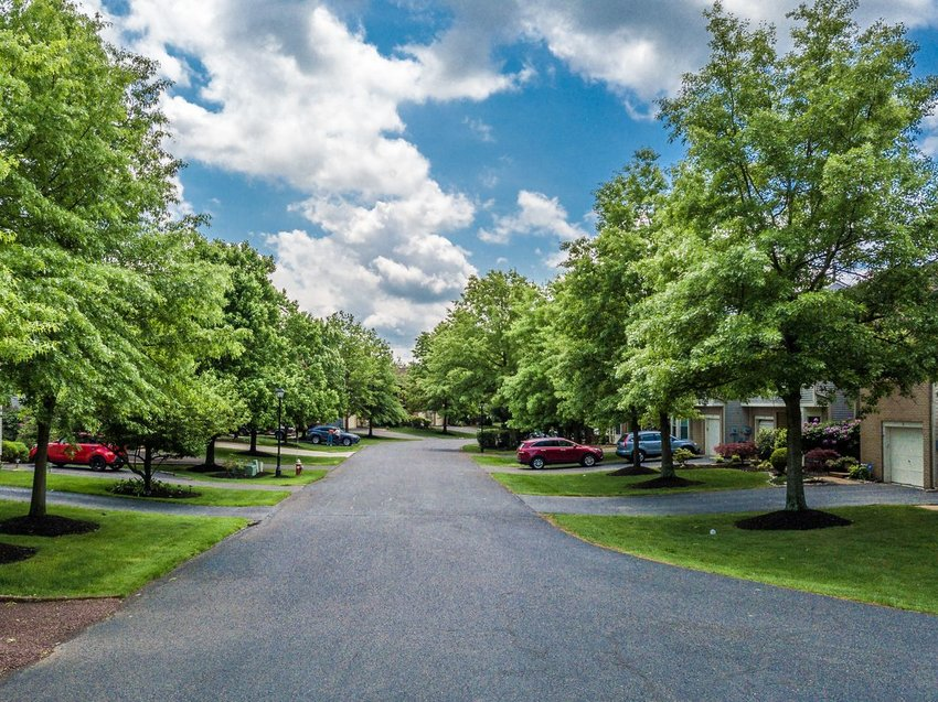 Photo of a tree-lined suburban street