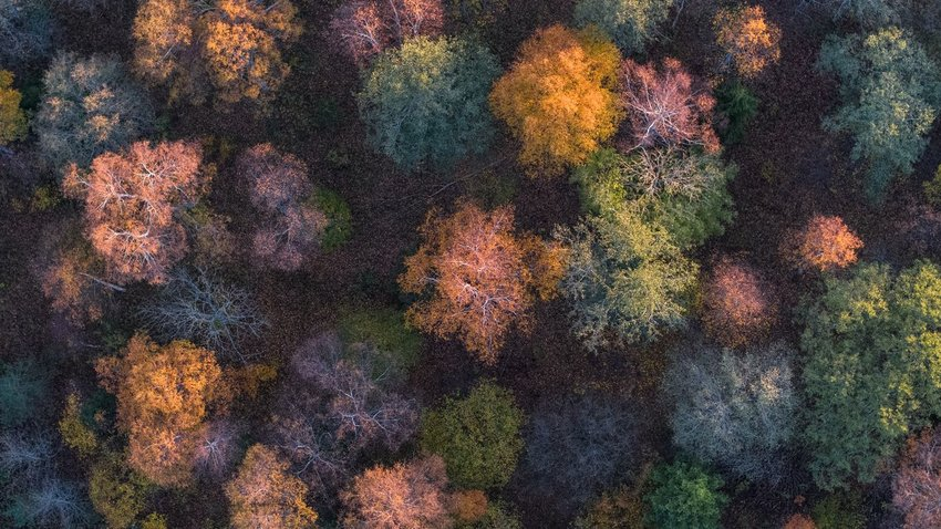 Aerial image of trees with leaves changing color
