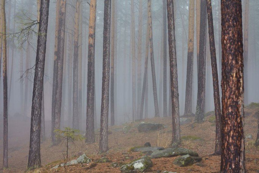 Photo of a foggy forest