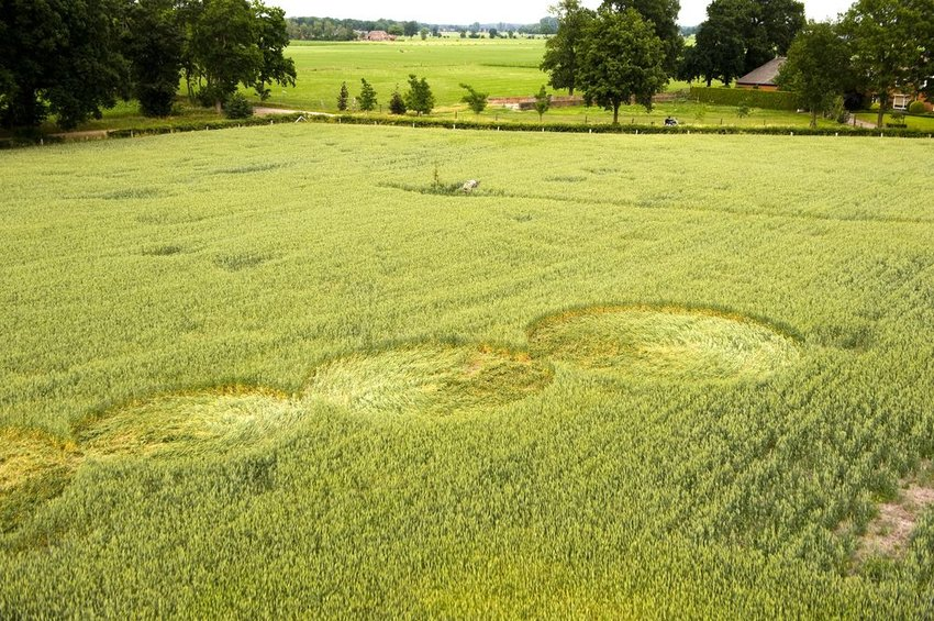 Photo of crop circles in the middle of a green field