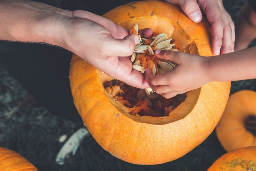 Photo of hands reaching into a hollowed-out pumpkin and pulling out seeds