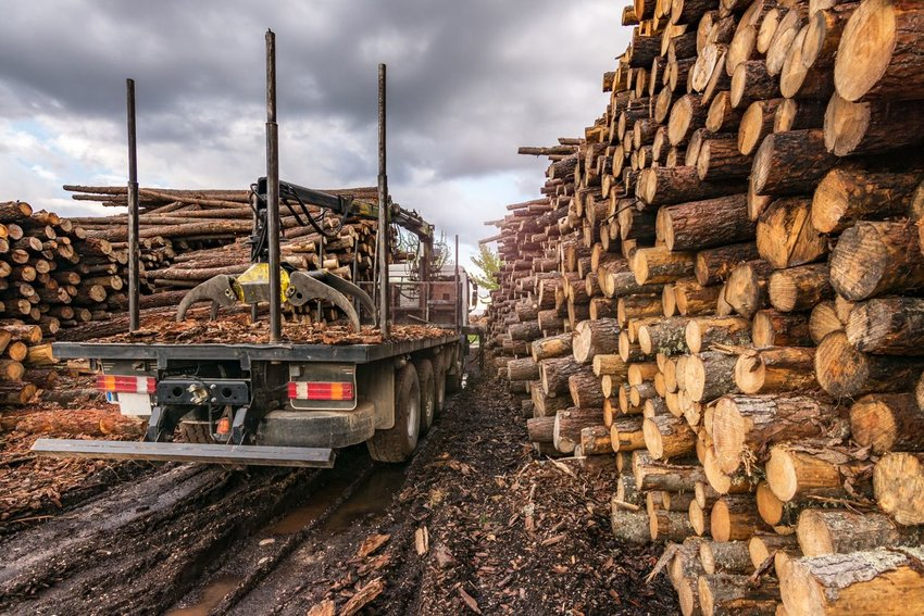 Commercial logging camp with huge stacks of logs and transportation trucks