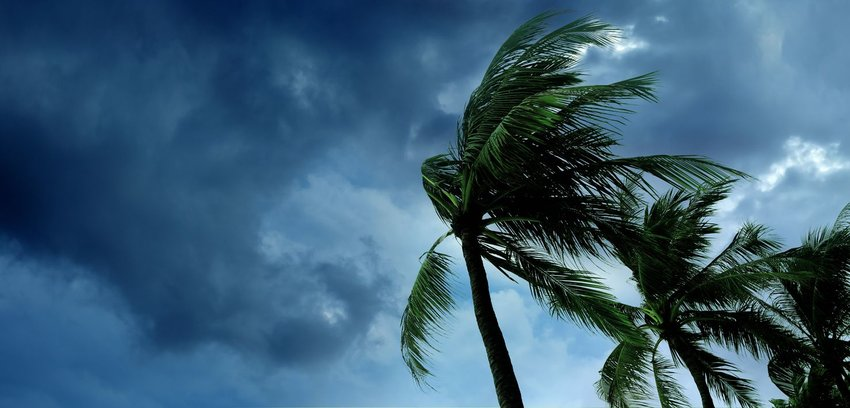 Tropical trees blowing fiercely in the wind as storm clouds approach