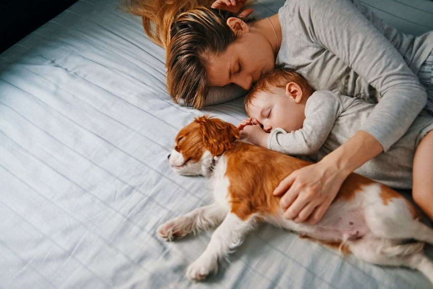 Mother, baby, and dog laying on bed together and falling asleep