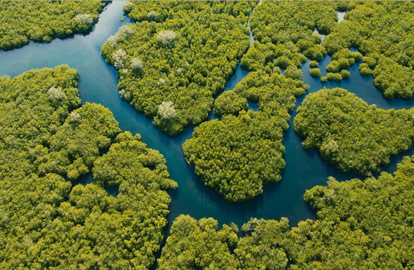 Aerial view of mangrove trees around river in the Phillipines