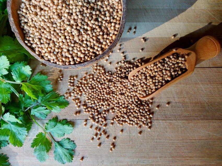 Fresh green cilantro beside large bowl of brown coriander seeds