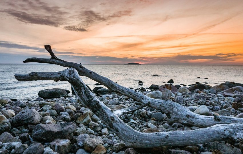 Driftwood on rocky beach at sunset