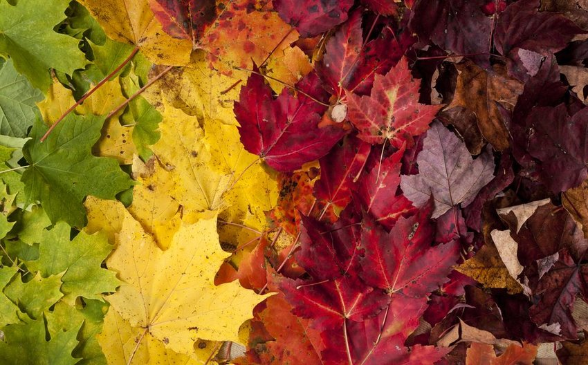 Big pile of leaves showing color gradient in greens, yellows, and reds