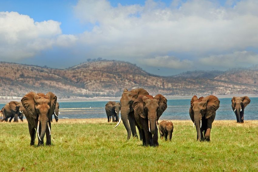 Group of elephants with hills in the background