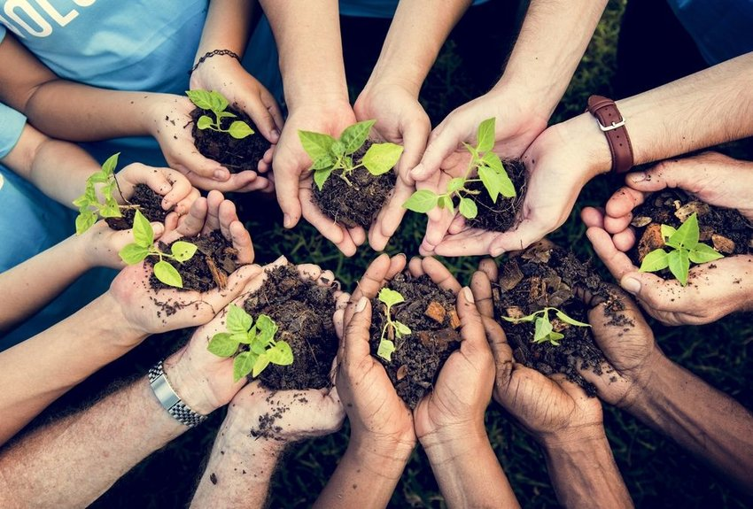 Circle of hands clutching handfuls of dirt, showing various saplings rising in growth