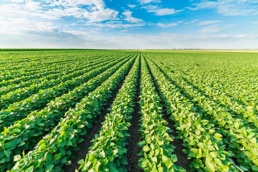 Rows of crops under a blue sky