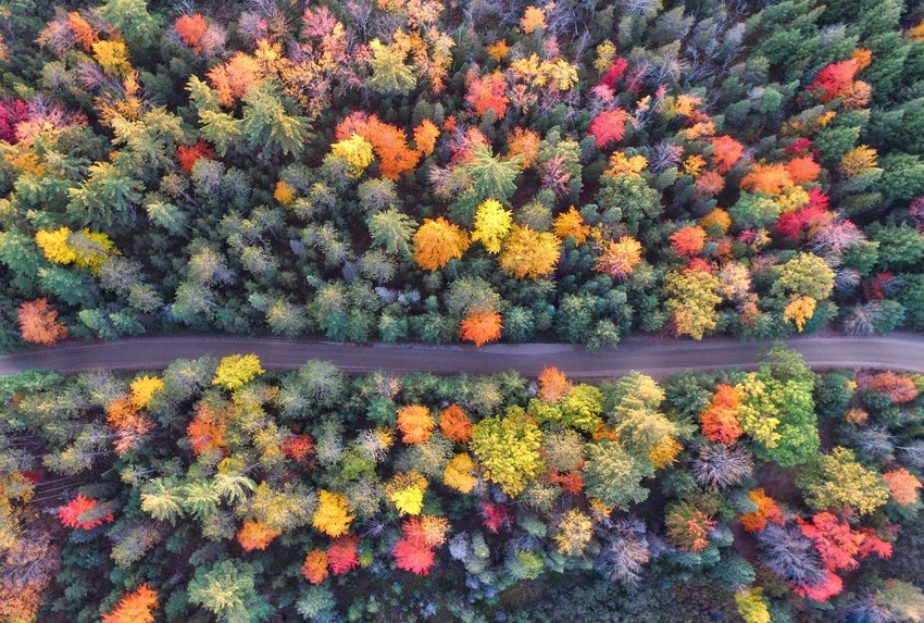 Aerial view of a road going through a forest in fall