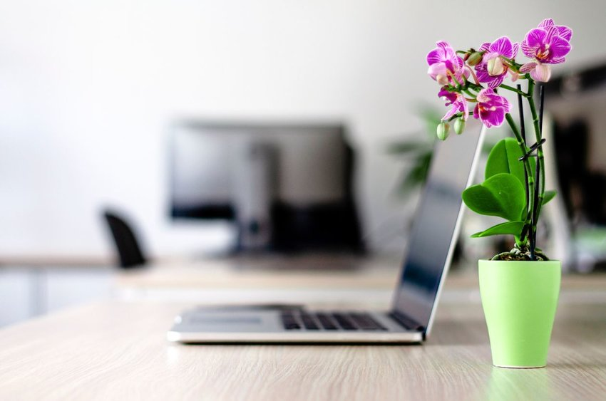 Orchid plant in a green pot on a desk with a laptop in the background
