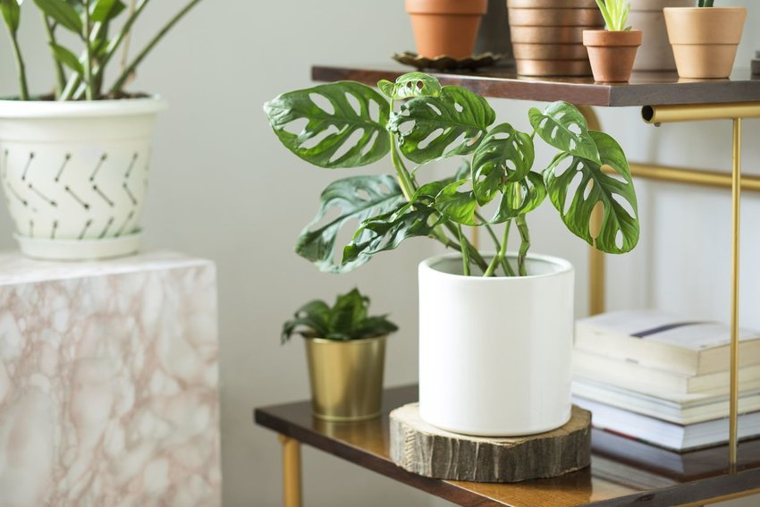 5 Houseplants With Actual Health Benefits