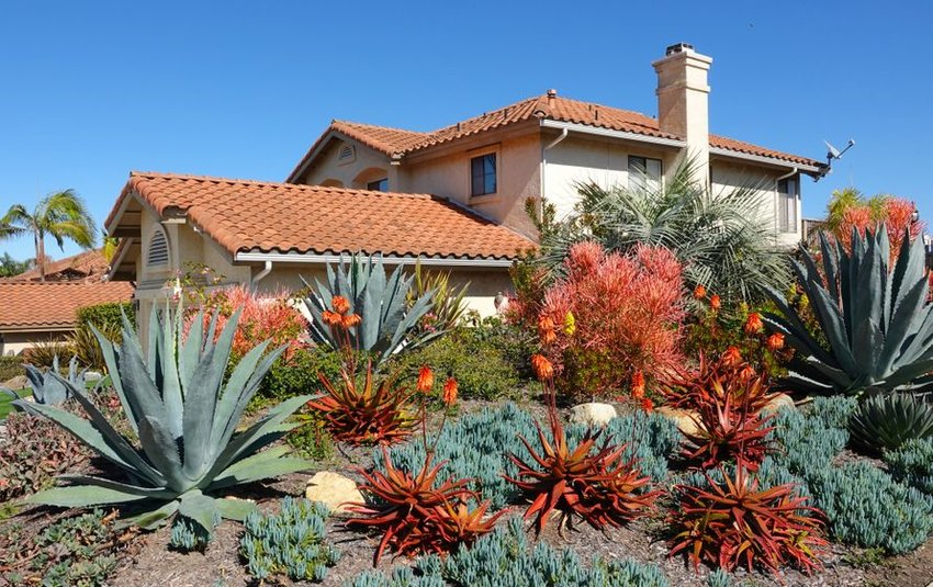 Drought tolerant landscaping in Southern California