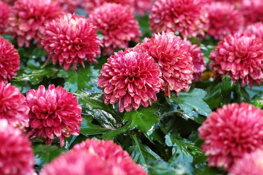Flower Code: The Hidden Meanings of 10 Popular Blooms