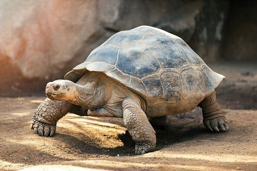 8 Fascinating Facts About Turtles