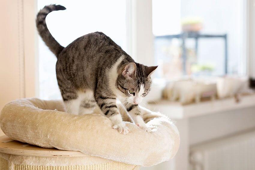 A cat kneading a cat bed.
