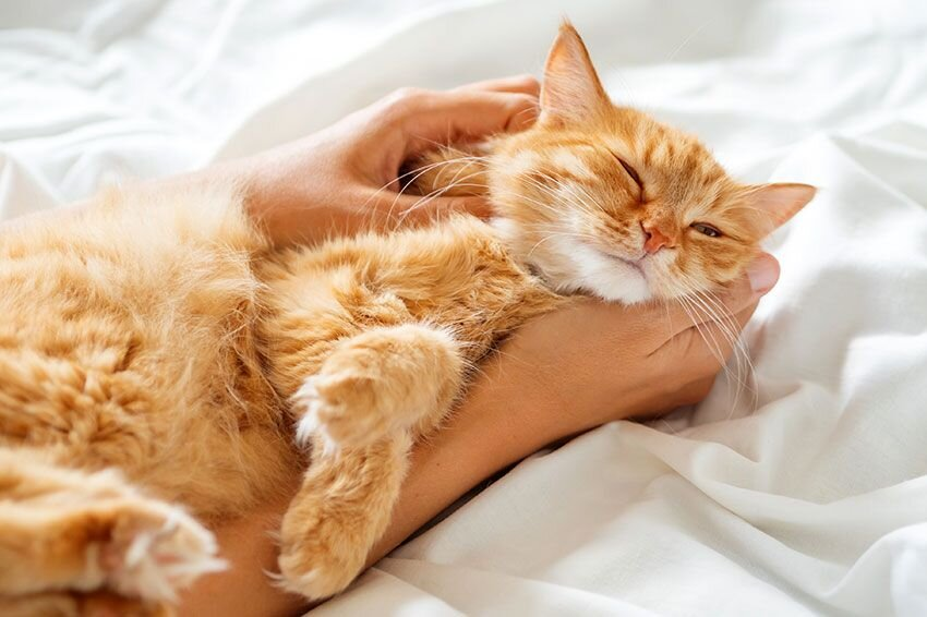 A cat laying in a woman's arms on a bed.