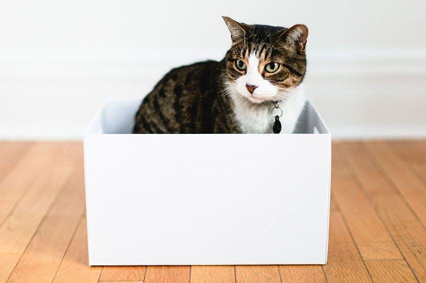 A cat sitting in a box.